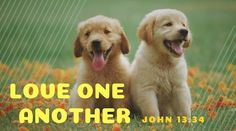 Photo of 2 puppies with message love one another Love One Another, Love You, John 13 34, Hugot, Daily Bread, Messages, Puppies, Reading, Dogs