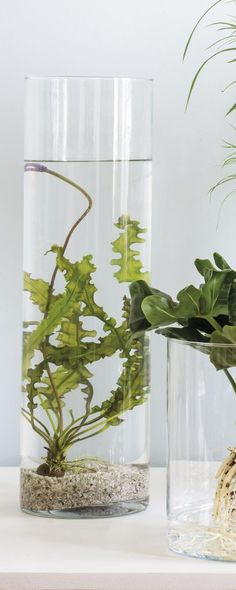 Trend groen in glas - Intratuin