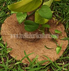 www.trellishorticulture.complant-protectors.php - Manufacturers, Exporters & Suppliers of Coir Mulch Mats in India.The coir fiber is treated with rubber and compressed into mats and cut into desired sizes with respect to planters.
