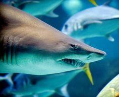 The Best Aquariums in the U.S.