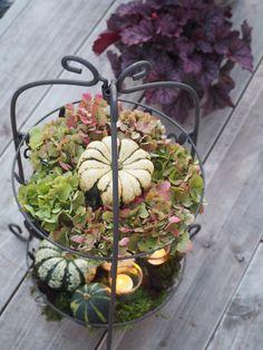 sommerheide und silberbl ttrige pflanzen mein garten pinterest mein garten pflanzen und. Black Bedroom Furniture Sets. Home Design Ideas