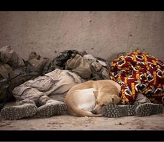 Catching some zzzzz,,,,,  SOF K9 Memorial Photo