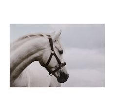 http://www.mgbwhome.com/HORSE-WITH-BRIDLEBR-available-online--P11134.aspx