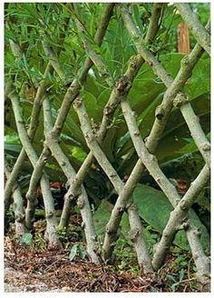 Weidenzaun, lebend, in Form geflochten, ähnlich Kreuzzaun (o. Jägerzaun)