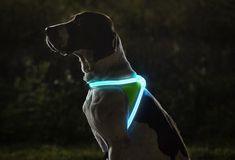 Lighthound | Image