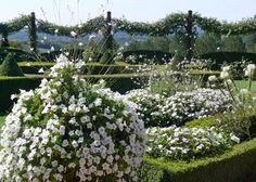 close-up in the White Garden - Les Jardins du Manoir d'Eyrignac - France