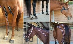 Kinesiology Tape can increase flexibility,athleticism, reduce… K Tape, Horse Therapy, Horse Anatomy, Kinesiology Taping, Western Riding, Horse Pattern, Increase Flexibility, Horse Tips, Ferrets