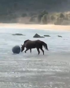 Funny Horse Videos, Funny Horses, Cute Horses, Pretty Horses, Horse Love, Funny Animal Videos, Cute Funny Animals, Funny Animal Pictures, Cute Baby Animals