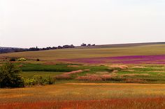Bulgaria ~ Drove through on way to Turkey.  The scenery was so colorful..Poppies everywhere.