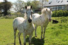 my ponies Ponies, Animals, Animales, Animaux, Animal, Pony, Animais