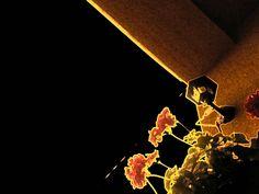 Erani World: Kwiaty