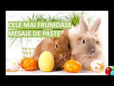 Cute Easter Bunny GIF images with Happy Easter Greetings