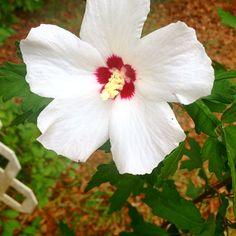 My roll tide flower