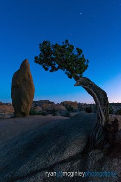 A lone California Juniper foregrounds an isolated rock during twilight in Joshua Tree National Park near Yucca Valley, California.