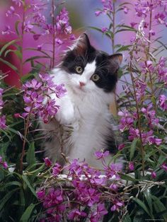 Kitten And Flowers Galore