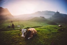 Click for voting - Guardian Photo by Ana Dumitru — National Geographic Your Shot
