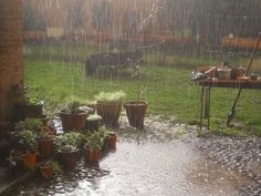 Be happy - you deserve it! garden aesthetic The Happy Cottage: Archive Nature Aesthetic, Northern Italy, Dream Life, Rainy Days, Country Life, Pretty Pictures, Beautiful Places, Scenery, Simple Living