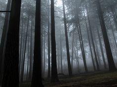 Mt. Tabor foggy morning, by Alicia Paulson (Posie Gets Cozy)