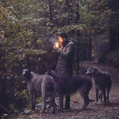 Deerhounds ❤️