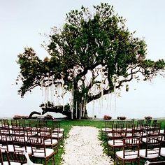 love this. wedding under a big tree. So magical.