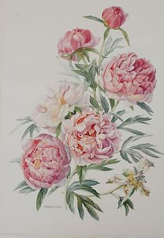 This with maybe a well placed gorgeous blackbird   Peony-Coral Charm.jpg 250×361 pixels