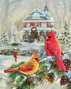 Springbok Puzzles - Cardinal Holiday Retreat - 1000 Piece Jigsaw Puzzle - Large 30 Inches by 24 Inches Puzzle - Made in USA - Unique Cut Interlocking Pieces *** Learn more by visiting the image link. (This is an affiliate link) Christmas Bird, Christmas Scenes, Vintage Christmas Cards, Christmas Pictures, Merry Christmas, Christmas Ornaments, Cardinal Birds, Christmas Paintings, Holiday Postcards