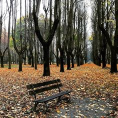 #parcodimonza #monza #igers #three #landscape #photography #view #autumn #autumnleaves #leaves #leaf #forest #italy