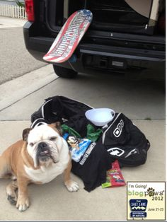 Woof! I'm packed & ready for #BlogPaws! Don't forget 2 follow me on #Pinterest