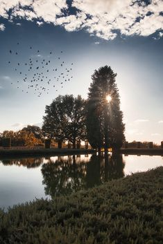 Waiting for the Sunset. Sun Rays, Tree Of Life, Some Pictures, Sunsets, Waiting, Trees, Nature, Outdoor, Beautiful