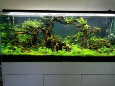 Great ‪#‎AquaScaping‬ by Green Chapter from Vietnam. Tank Size 150 x 60 x 60 cm #Miniscaping