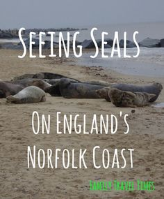 The whole family loved visiting Horsey Beach in Norfolk, because there were hundreds of hundreds of seals! Europe Travel Tips, Time Travel, Travel Usa, Places To Travel, Travel Destinations, European Vacation, European Destination, Travel With Kids, Family Travel