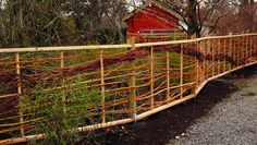 This fence was made from Willow and Red-Osier Dogwood cuttings. All from plants on property. The Vineyard posts and Cedar 2x4's with inserted dowels create the framework for the natural materials.