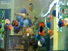 Discus & Other