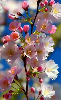 Claudia Beso – Google+ Beautiful Flowers Wallpapers, Beautiful Rose Flowers, Beautiful Nature Wallpaper, Beautiful Flower Arrangements, Flowers Nature, Exotic Flowers, Amazing Flowers, Pretty Flowers, Colorful Flowers