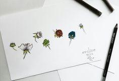 •And the life cycle of a little berry #botanical #botanic #tattooartist#vegantattoo #tattoodesign #tattoo#design #drawing #tattooed #vegan#vegantattooartist #berry #naturetattooes#nature #evalinemia