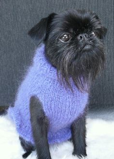 Dressed to Frill Luxury Mohair Sweater - made to order Griffin Dog, Griffon Bruxellois, Lion Dog, Brussels Griffon, Rat Terriers, Puppy Clothes, White Lilies, Cutest Thing Ever, Mohair Sweater