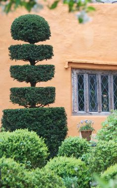 portfolio garden 9 - Arne Maynard Garden Design - fabulous yew 'cake stand'.