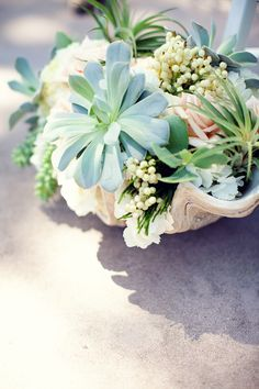 succulent arrangement in a giant clam shell by seascape flowers