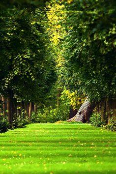 Elvish Wallpaper For Iphone Green Grass Life Beautiful Places Gardens Outdoor Garden House