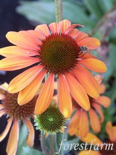 Forestfarm Tiki Torches, Plant Nursery, Seeds, Bloom, Butterfly, Fun Stuff, Plants, Gardening, Fun Things