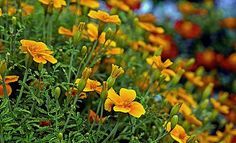 Kdy co sazet Plants, Gardening, Ideas, Garten, Lawn And Garden, Planters, Thoughts, Plant, Square Foot Gardening