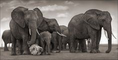 Portraits of a ravaged land: incredible photography by Nick Brandt