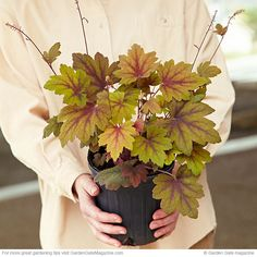 Perennial shopping tips | Garden Gate eNotes Make sure you closely examine a damaged plant before you decide to buy it.