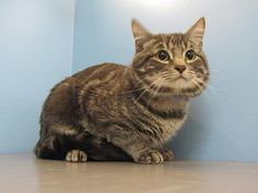 Meet Leroy! This majestic boy is looking for a nice quiet home to call his own. He is a shy guy, but if you go slow with him, he can be quite the little gentleman! He is very independent, and may enjoy a home where he has room to explore his surroundings. He also likes to play, and will come find you if he wants attention. He came from another shelter, so we do not know his history with other animals. Any introductions to new friends should be done with supervision. Due to his dislike for…