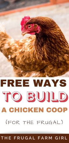 Have you thought about building a chicken coop, but held off because you didn't know anything about what kind of material to use, how to put the material together to make the coop or because you thought it might cost more than you wanted to spend? #backyardchickens #chickens #coops #coopideas #diy #free #homesteading #homesteader #hens