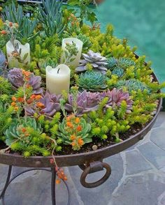Sedum with candles. Could do this in a smaller container for table centerpiece inside or outside.
