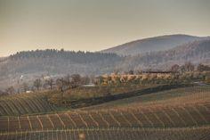 bulgari-winery
