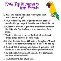 FAQ top 10 answers from Parrots