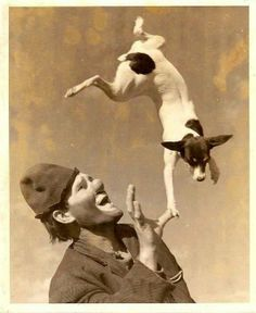 Jack joined the Circus . Vintage photo of a Clown & Jack Russell Terrier . Circus Vintage, Old Circus, Jack Russell Terriers, Jack Russell Dogs, Smooth Fox Terriers, Toy Fox Terriers, Rat Terrier Puppies, Dog Photos, Comics