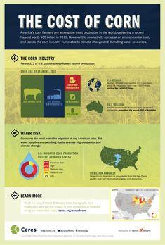 The Cost of Corn - Corn is Killing Us